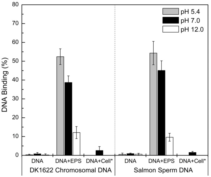 DNA bound to M. xanthus EPS at different pHs. The binding percentages of wild-type DK1622 chromosomal DNA (left) and commercial salmon sperm DNA (right) to isolated EPS were determined at different pHs, and the average ± SD is plotted. On the x-coordinate, 'DNA' represents different DNA samples, 'EPS' represents isolated M. xanthus EPS and 'Cell*' represents SW504 cells, which were added to the test system.