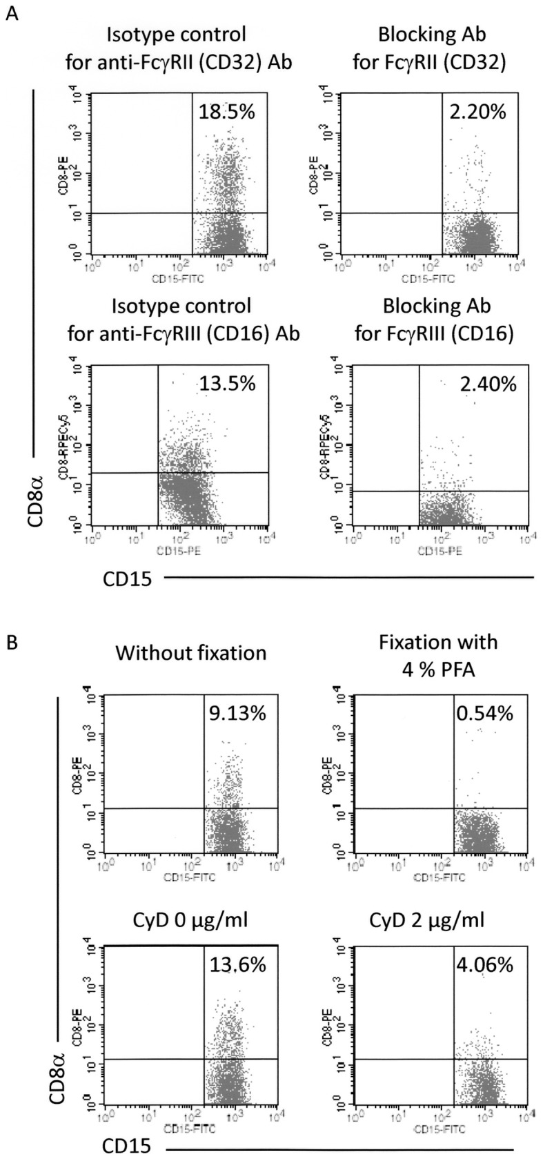 Requirement of FcγRs, dynamism of plasma membrane, and actin recruitment in detection of CD8 + granulocytes. ( A ) Involvement of FcγRII (CD32) and FcγRIII (CD16) in the detection of CD8 + granulocytes. Heparinized blood samples were pre-incubated with the anti- FcγRII (CD32) Ab (AT10) or with the anti-FcγRIII (CD16) Ab (3G8). After the pre-incubation, the samples were made to react with the PE or PECy5-labeled anti-CD8α Ab (HIT8a). After depletion of erythrocytes, the cells were re-suspended in PBS followed by reaction with the FITC or PE-labeled anti-CD15 Ab (H198), and then served for FCM. PE or PECy5-labeled mouse IgG1 and FITC or PE-labeled mouse IgM were used as isotype-matched controls for HIT8a and H198, respectively. ( B ) Effects of plasma membrane fixation and inhibition of actin recruitment in the detection of CD8 + granulocytes. <t>PMNs</t> and <t>PBMCs</t> were mixed together. For fixation of the plasma membrane, the cells were exposed to 4% PFA for 10 min at room temperature. After washing 3 times with PBS, the cells were re-suspended in the autologous serum. The samples were made to react with the PE-labeled anti-CD8α Ab (HIT8a). After removal of unbound Abs, the cells were re-suspended in PBS followed by reaction with the FITC-labeled anti-CD15 Ab (H198), and then served for FCM. For inhibition of actin recruitment, the mixture of PMNs and PBMCs was made to react with CyD (2 µg/ml) for 30 min at 37°C. After the pre-incubation, the cells were made to react with the PE-labeled anti-CD8α Ab (HIT8a). After removal of unbound Abs, the cells were re-suspended in PBS followed by reaction with the FITC-labeled anti-CD15 (H198), and then served for FCM. PE-labeled mouse IgG1 and FITC-labeled mouse IgM were used as isotype-matched controls for HIT8a and H198, respectively. These experiments were repeated 3 times.