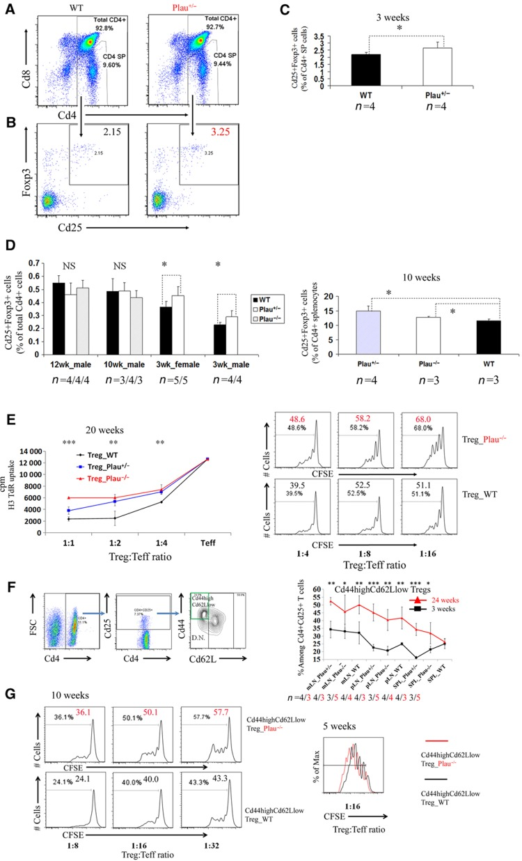 Elevated thymic Foxp3 + Treg population while diminished suppressive capability of Cd44 high Cd66L low Tregs in Plau -KO mice. ( A ) Percentages of Cd4 + SP cells among murine thymocytes isolated from wild-type (WT) control mice and Plau heterozygous knockout mice ( Plau +/ − ) assessed by FACS. ( B ) Percentages of Cd25 + Foxp3 + cells among murine Cd4 + SP thymocytes isolated from WT and Plau +/ − mice assessed by FACS. Only gated Cd4 + SP cells from (A) are shown in (B). Data represent one of the four mice per group. ( C ) Comparison of percentages of Cd25 + Foxp3 + cells among murine Cd4 + SP thymocytes between 3-week-old WT and Plau +/ − groups. Data are representative of two independent experiments. ( D ) Left, comparison of percentages of Cd25 + Foxp3 + cells among murine total Cd4 + thymocytes between WT and Plau +/ − and/or Plau −/ − groups, aged 12, 10 and 3 weeks. Error bars represent s.d. values. P -value represented by '*' symbols indicate results from a one-tailed Student's t -test for n mice per group (the corresponding number n per group is indicated under each group column). Right, comparison of percentages of Cd25 + Foxp3 + cells among murine total Cd4 + splenocytes between WT, Plau +/ − and Plau −/− groups in 10-week-old mice. ( E ) Comparison of suppressive capability of Cd4 + Cd25 + Tregs between littermate WT, Plau +/ − , and Plau −/− groups, age ≥20 weeks. Left, proliferation assessed by uptake of [H3]thymidine. The P -value above each ratio represented by '*' symbols indicates the results from a one-tailed Student's t -test between WT and Plau −/− groups. Right, proliferation assessed by the CFSE dilution measurement of Cd25 − Ths co-cultured with Plau −/− or WT Tregs as well as irradiated feeder cells and Cd3 at various ratios of Tregs to Teffs after 3.5 days. Number in each histogram represents percentage of dividing cells from the total population (the total population indicates the gated DAPI-negative and CD4 + , CFSE stained Ths). ( F ) 