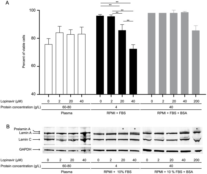 The protein concentration of PI incubation medium influences the effect of PI on prelamin A processing in PBMC. PBMC were incubated for 24 hours with increasing concentrations of lopinavir (0, 2, 20, 40, 200 µM) diluted in plasma (total protein concentration: 60–80 g/L), in RPMI culture medium supplemented with 10% FBS and 2 mM L-glutamine (total protein concentration: 4 g/L), or in the RPMI culture medium supplemented with BSA (total protein concentration: 40 g/L). ( A ) Percentage of viable cells in plasma (white), culture medium (black), and BSA supplemented culture medium (gray) (error bars = SD, n ≥3, at least 200 cells counted in each experiment). **p