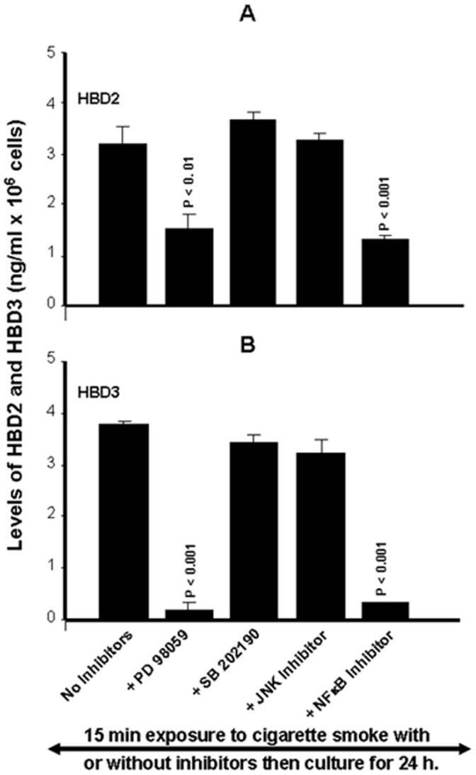 Whole cigarette smoke promoted human β-defensin-2 and -3 secretions through the ERK1/2 MAP kinase and NFκB signaling pathways. Confluent (80%) gingival epithelial cell cultures were incubated with 10 µM of ERK inhibitor (PD98059), 10 µM of p38 inhibitor (SB202190), 10 µM of JNK inhibitor (SP600125), or 10 µM of NF-κB inhibitor (IKK-2) for 45 min before exposure or not to cigarette smoke for 15 mn. 24 hours later, supernatants were collected and used to measure the β-defensin secretion levels by ELISA kits. Data are expressed the means+SD, (n = 4).