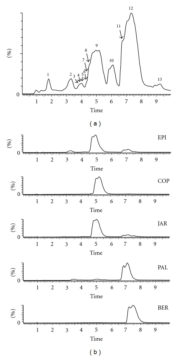 (a) The representative chromatogram of C. chinensis Franch. by <t>UPLC-qTOF/MS</t> (the numbers of peaks are same with the identification in Table 1 ). (b) The chromatograms of standard compounds (EPI: epiberberine; COP: coptisine; JAR: jatrorrhizine; PAL: palmatine; BER: berberine).