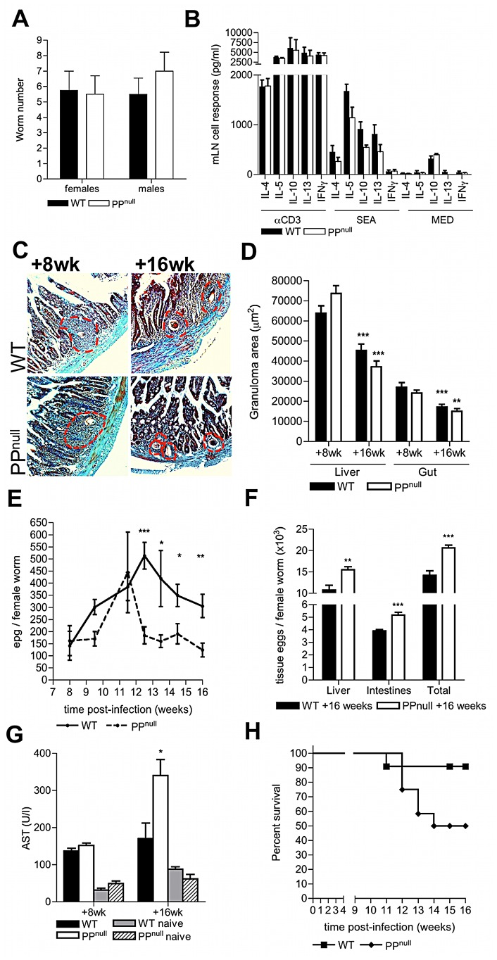 PP are required to sustain optimum egg transmission and limit host morbidity. (A) Quantitative analysis of adult schistosome worm recoveries following perfusion of the hepatic portal system in WT or PP null mice. (B) Cytokine secretion by mLN cells from WT and PP null mice 8 weeks post-infection following in vitro stimulation with anti-CD3 mAb, or soluble egg antigen. (C) Masson's Trichrome stained histological sections of duodenum (blue = collagen) at post-infection in WT or PP null mice (red dotted lines = extent of egg granulomas). (D) Reduction in granuloma areas at 16 cf. 8 weeks; min 4 granulomas/mouse, **P