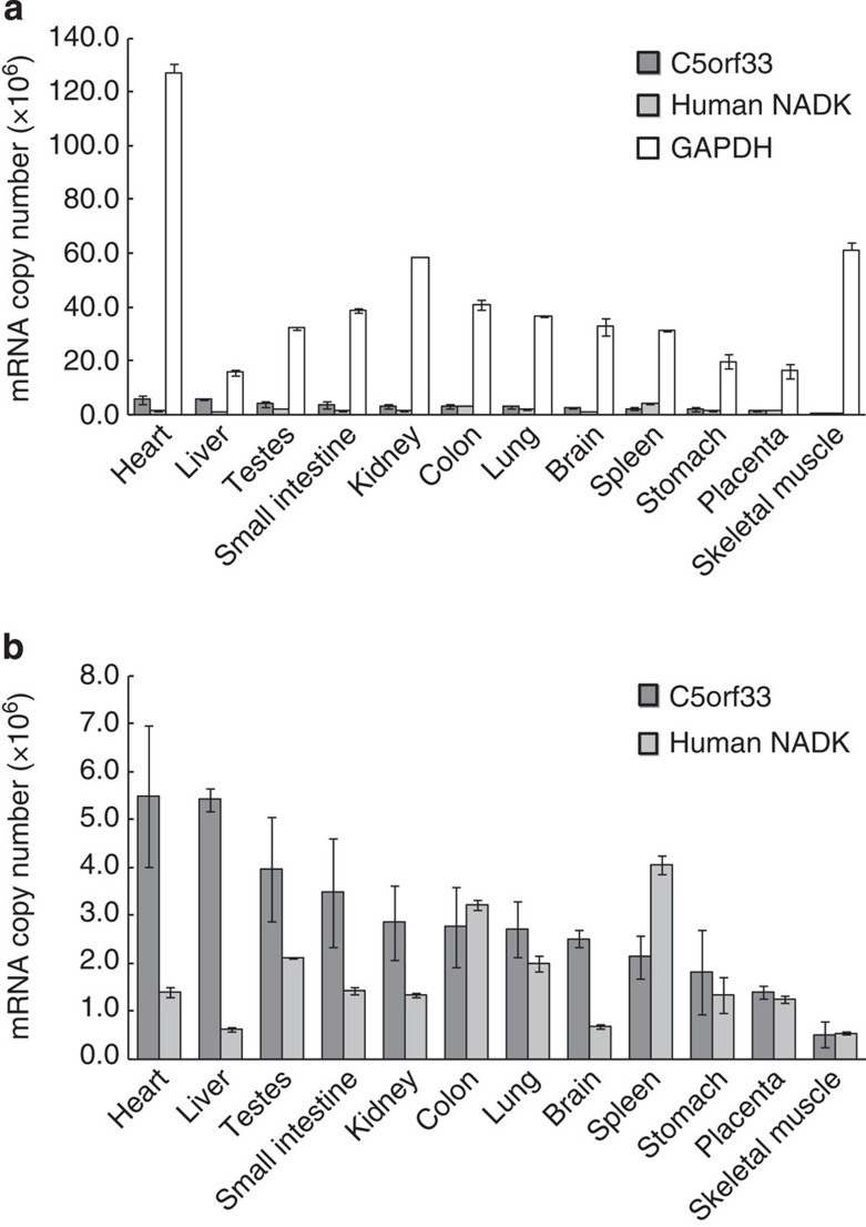 Tissue-specific mRNA levels determined by absolute qPCR. mRNAs of C5orf33 protein (dark grey), human NADK (light grey) and GAPDH (white bars) ( a ); only those of the C5orf33 protein and human NADK are shown in panel b . Means and s.d. of three determinations are shown.