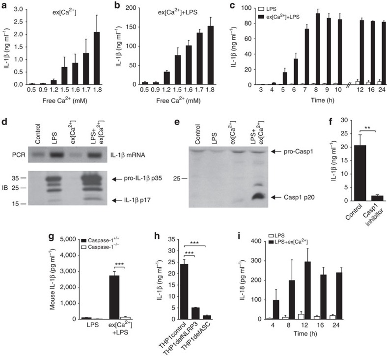 Extracellular calcium induces monocyte IL-1β release by activating the inflammasome. ( a , b ) IL-1β release of CD14+ monocytes in response to increasing ex[Ca 2+ ] alone ( a ) or to increasing ex[Ca 2+ ] plus LPS ( b ) after 16 h of stimulation ( n =3). ( c ) time course of IL-1β release of CD14+ monocytes after stimulation with LPS alone or with increased ex[Ca 2+ ] (1.7 mM) plus LPS ( n =3). ( d ) PCR (upper panel) and immunoblot (IB, lower panel) for IL-1β in unstimulated monocytes (control) and in monocytes stimulated with LPS, with increased ex[Ca 2+ ] concentration (1.7 mM), or both, after 16 h of culture. Specific bands for IL-1β mRNA, pro-IL-1β p35 and IL-1β p17 as indicated. One representative experiment out of three is shown. ( e ) IB analysis of Caspase-1, which shows the activation of Caspase-1 in supernatants harvested from unstimulated monocytes (control) and in monocytes stimulated with LPS, with increased ex[Ca 2+ ] concentration (1.7 mM), or with both, after 16 h of culture. Specific bands for pro-Caspase-1 (pro-Casp1) and Caspase-1 (Casp1 p20) are indicated, shown is one representative blot out of three experiments performed. ( f ) IL-1β secretion of monocytes stimulated with ex[Ca 2+ ] plus LPS in the absence and presence of the caspase-1 inhibitor Z-WEHD-FMK (5 μM, n =3). ( g ) mIL-1β secretion of monocytes from Caspase-1 +/+ and Caspase-1 −/− NOD mice stimulated with LPS or with ex[Ca 2+ ] plus LPS ( n =3). ( h ) IL-1β secretion of THP-1 cells (control), NLRP3-deficient THP-1 cells (THP1defNLRP3) and ASC-deficient THP-1 cells (THP1defASC) stimulated with increased ex[Ca 2+ ] concentration (1.7 mM) and LPS, after 16 h of culture ( n =3). ( i ) Time course of IL-18 release of CD14+ monocytes after stimulation with LPS alone or with increased ex[Ca 2+ ] (1.7 mM) plus LPS ( n =3). In all experiments, cytokine concentrations were determined in the supernatant by enzyme-linked immunosorbent assay. All bars show mean±s.e.m. Statistical analysis was pe
