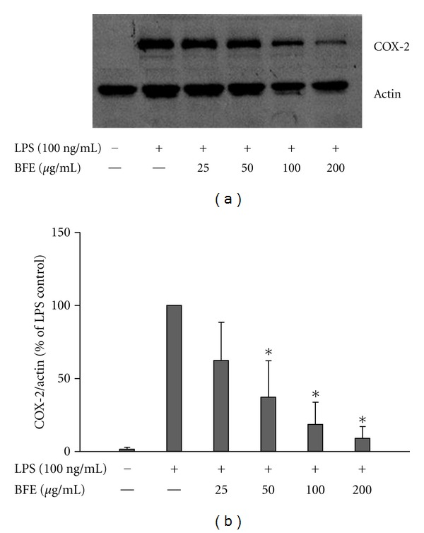 (a) BFE inhibited COX-2 protein expression in LPS-stimulated primary microglia. Cells were stimulated with LPS (100 ng/mL) in the presence or absence of BFE (25–200 μ g/mL) for 24 h. At the end of incubation period, COX-2 protein levels were measured using western blot using specific antibodies for each protein. (b) Quantitative densitometric analysis of COX-2 protein expression normalized to actin loading control. All values are expressed as mean ± SEM for 3 independent experiments. Data were analysed using one-way ANOVA for multiple comparison with post-hoc Student Newman-Keuls test. * P
