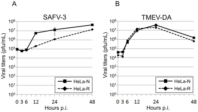Growth kinetics of SAFV-3 and TMEV-DA on HeLa-N and HeLa-R cells. A: Growth kinetics of SAFV-3. Solid and broken lines indicate the growth curves of SAFV-3 on HeLa-N and HeLa-R cells, respectively. The viruses (as a mixture of cell-free and cell-associated viruses) were harvested at several time points indicated and assayed for titers by a standard plaque assay on HeLa-N cells. Titers shown are the means ± S.D. in three independent experiments. B: Growth kinetics of TMEV-DA. Solid and broken lines indicate the growth curves of TMEV-DA on HeLa-N and HeLa-R cells, respectively. The viruses (as a mixture of cell-free and cell-associated viruses) were harvested at several time points indicated and assayed for titers by a standard plaque assay on BHK-21 cells. Titers shown are the means ± S.D. in three independent experiments.