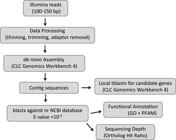 Workflow followed for the transcriptome analysis.