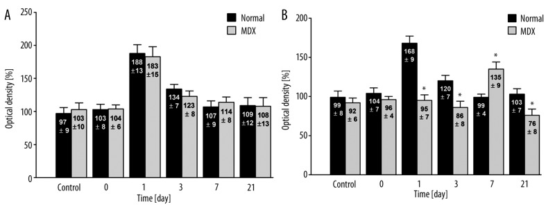 Immunohistochemical analysis of VEGF expression in cardiac vessel endothelial cells ( A ) and in cardiac myocytes ( B ) from normal (C57BI/10ScSn) and mdx (C57BI/10ScSn) mice (values are optical densities expressed as percentage of the signal for control mice).). N – 5 samples from each group, 5 fields of myocardium in 6 preparations from each mouse were examined together 150 analysis. * Statistically significant compared to normal – healthy mice.
