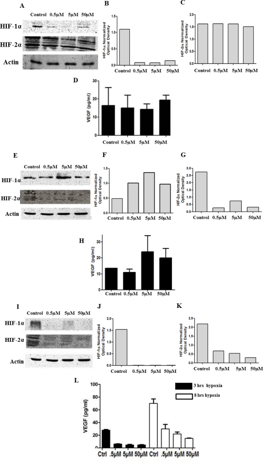 Inhibition of both HIF-1α and HIF-2α elicits the loss of VEGF expression. HLE-B3 cells were cultured in 25 cm 2 flasks with 20% FBS and switched to serum-free media 24 h before the experiment. The cells were incubated with 3 ml of serum-free media containing 0.5 µm, 5 µm, and 50 µm HIF-1α inhibitor, HIF-2α inhibitor, and HIF-1α/HIF-2α double translation inhibitor for 3 or 8 h in hypoxia. The effect of the inhibitors on HIF-1α and HIF-2α protein expression was analyzed using western blot analysis. Cell lysates (20 ug protein/lane) were identified using either anti-rabbit HIF-1α or HIF-2α at 1:1000 dilutions and lane loading was normalized using a 1:1000 dilution of rabbit anti- pan-actin antibody. Effect of HIF-1α and/or HIF-2α inhibition on VEGF levels in hypoxia. HLE-B3 cells were cultured in 25 cm 2 flasks with 20% FBS and switched to serum-free media 24 h before the experiment. The cells were incubated with 3 ml of serum-free media containing 0.5 µm, 5 µm and 50 µm HIF-1α inhibitor, HIF-2α inhibitor and HIF-1α/HIF-2α double translation inhibitor for 3 or 8 h in hypoxia. Cell free supernatants collected in triplicate were analyzed for VEGF levels by ELISA. The HIF-1α translation inhibitor at all concentrations inhibited HIF-1α without affecting the HIF-2α protein synthesis ( A ). Figure ( B ) and ( C ) represent the densitometry analysis for HIF-1α and HIF-2α protein expression. There was no significant difference in the VEGF levels between the control cells and cells treated with HIF-1α inhibitor ( D ). One-way ANOVA analysis was performed to compare the VEGF levels between the control and the three concentrations of HIF-1α inhibitor and the p value was > 0.05. The HIF-2α translation inhibitor at all concentrations inhibited HIF-2α without affecting the HIF-1α protein synthesis ( E ). Figure ( F ) and ( G ) represent the densitometry analysis for HIF-1α and HIF-2α protein expression. There was no significant difference in the VEGF levels between the control cells