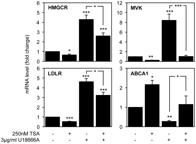 TSA treatment partially reverts the effect of U18666A on the expression of genes involved in cholesterol synthesis, uptake and efflux. SH-SY5Y neuroblastoma cells were pre-treated with 3 µg/ml U18666A for 6 h and with or without 250 nM TSA for 16 h. mRNA transcript levels of HMGCR, MVK, LDLR and ABCA1 were analyzed by qPCR. Values were normalized to the internal standard β-actin and are expressed as fold change relative to untreated cells. Data represent means ± SEM from at least three individual experiments (* p