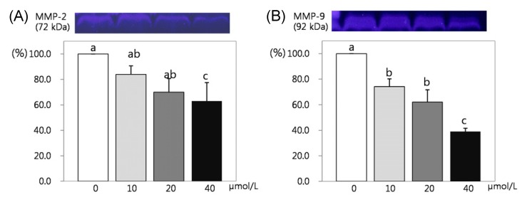 Effect of resveratrol on MMP 2 activity in 3T3-L1 cells. 3T3-L1 cells were plated at a density of 2.0 × 10 4 cells/dish with DMEM supplemented with 10% BCS for 2 days, the monolayers were differentiation induction with DMEM supplemented with 10% FBS, 10 µg/mLinsulin, 1 µmol/L Dex, 0.5 mmol/L IBMX for 2 days. After differentiation induction, the monolayer was incubated in post differentiation medium with 0, 10, 20, and 40 µmol/L resveratrol. The media were collected and concentrated for zymography. MMP-2 bands (A) and MMP-9 bands (B), which were representative of three independent experiments, are shown. Each bar represents the mean ± SE. Comparison among different concentrations of resveratrol that yielded significant differences ( P
