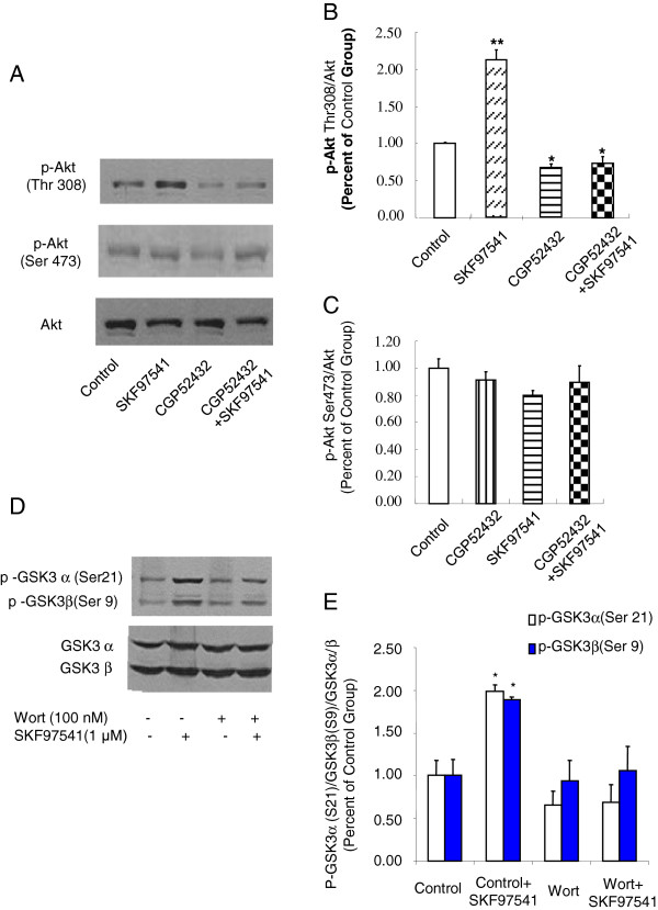 Activation of GABA B receptors elevates Akt (Thr-308) phosphorylation in HEK293T cells expressing GABA B receptors, which can be blocked with pretreatment of PI3K inhibitor Wortmannin. A. Western blot analysis of phosphorylated Akt (Thr-308) or Akt (Ser-473) levels in extract prepared from HEK 293T cells transfected with GABA B receptor in the presence of GABA B receptor antagonist and/or agonist. Akt was used as a loading control. B-C. Densitometric analysis of phosphorylated Akt (Thr-308) (B) and Akt (Ser-473) (C). The intensity of phospho-Akt was quantified by densitometry (software: Image J, NIH). D. Western blot analysis of phosphorylated GSK-3α/β (Ser-21/Ser-9) or GSK-3α/β levels in extract prepared from HEK293T cells transfected with GABA B receptor pretreated with/without Wortmannin (100 nM, 24 h) in the presence or absence of GABA B receptor agonist SKF97541. E. Densitometric analysis of phosphorylated GSK-3α/β (Ser-21/Ser-9). The intensity of phosphor- GSK-3α/β (Ser-21/Ser-9) was quantified by densitometry (software: Image J, NIH). Data were analyzed by one-way or two-way ANOVA (* P