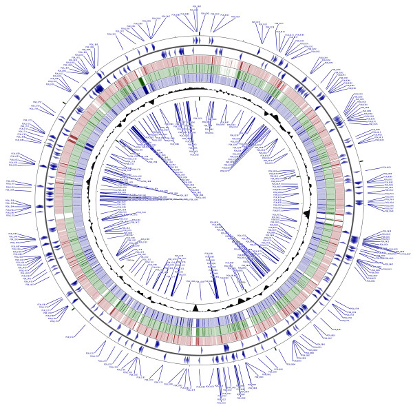 Mapping of the P. gingivalis essential genes. In blue in the outermost ring are shown the putative P. gingivalis essential genes identified by transposon mutagenesis of strain ATCC 33277. Blue arrows depict the orientation of the essential genes. Genetic loci for positive strand (outer set of arrows) are shown in the outermost circle and genetic loci for the negative strand are shown in the innermost ring. In red tick marks are coding sequences for P. gingivalis strain W83, in green are coding sequences for strain W50 and in blue are coding sequences for strain TDC60. Shaded black area represents GC-content for given regions. CGViewer ( http://stothard.afns.ualberta.ca/cgview_server/ ) was utilized to visualize the entire circular genome of P. gingivalis strain ATCC 33277 with the putative essential genes labeled [ 52 ]. NCBI FASTA files of P. gingivalis strains W83, W50 and TDC60 were used for BLAST matching to the ATCC 33277 base genome.