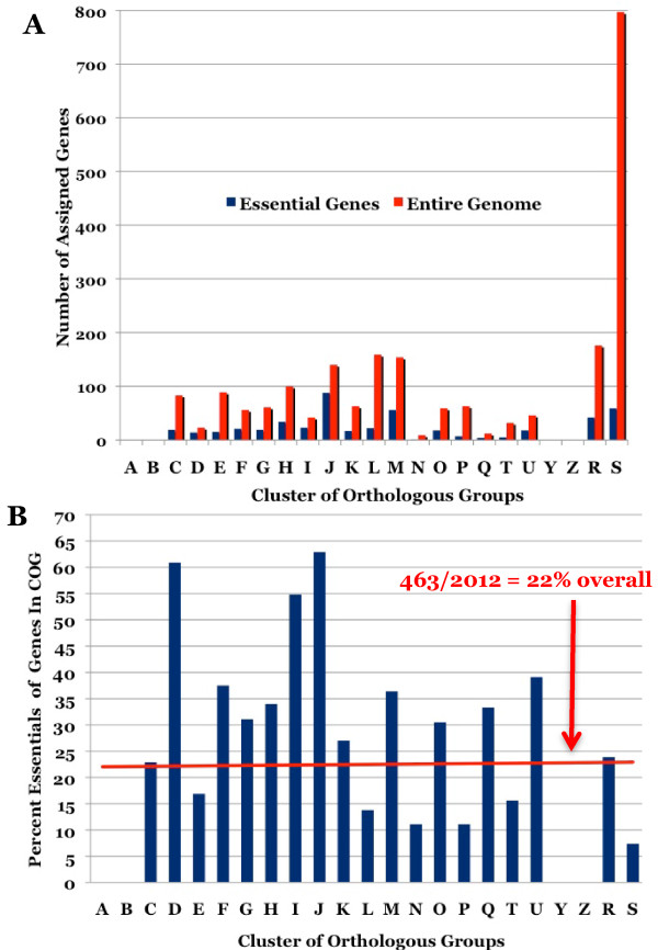 Distribution of P. gingivalis ATCC 33277 essential genes by Cluster of Orthologous Groups (COG) classifications. A ) Number of genes within a COG category; essential genes in blue and entire genome in red. B ) Percent of essential genes within a COG category from total number in genome; red line represents the 22% that 463/2102 of the percent essential over the entire genome. [A = RNA processing and modification, B = Chromatin structure and dynamics, C = Energy production and conversion, D = Cell cycle control, E = Amino acid metabolism and transport, F = Nucleotide metabolism and transport, G = Carbohydrate metabolism and transport, H = Coenzyme metabolism, I = Lipid metabolism, J = Translation, K = Transcription, L = Replication and repair, M = Cell wall/membrane/envelop biogenesis, N = Cell motility, O = Post-translational modification, protein turnover, chaperone functions, P = Inorganic ion transport and metabolism, Q = Secondary structure, T = Signal transduction, U = Intracellular trafficking and secretion, Y = Nuclear structure, Z = Cytoskeleton, R = General functional prediction only, S = Function unknown].