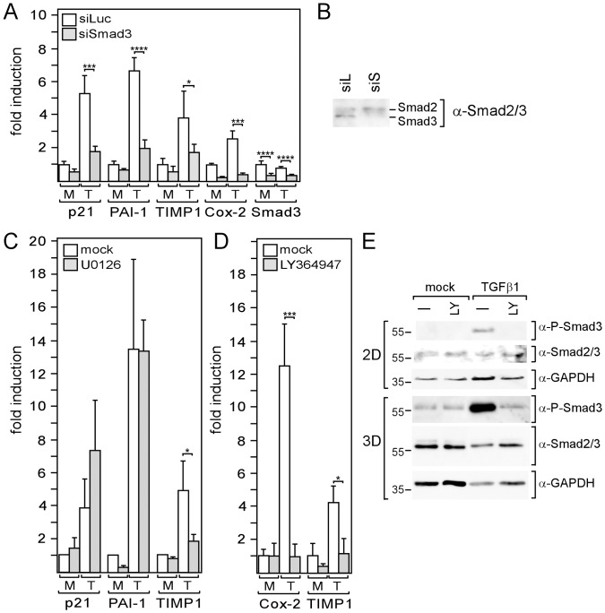 Smad3 and/or ERK1/2 are involved in the TGFβ-mediated regulation of genes in MDA-MB-231 cells. (A, B) MDA-MB-231 cells were transfected with siSmad3 or control siRNA (siLuc) and incubated for three days in 2D cultures before cells were treated with TGFβ1 (T) or mock-treated (M) for 24 h, lysed and analyzed for RNA expression of Smad3, p21, Cox-2, PAI-1 and TIMP-1 by Q-RT-PCR (A) or for nuclear Smad3 protein expression by Western blot analysis (B). (C, D, E) Cells in 2D cultures (C, D, E) or 3D cultures (E) were incubated for 24 h with TGFβ1 (T) or mock-treated (M) in the presence or absence of U0126 (C) or <t>LY364947</t> (D, E) and analyzed for RNA expression of genes as indicated (C, D) or for nuclear Smad3 and phospho-Smad3 expression (E). GAPDH was used as a protein loading control (E). (A, C, D) Each bar represents the mean value ± SD of 3–6 independent experiments.* p-value
