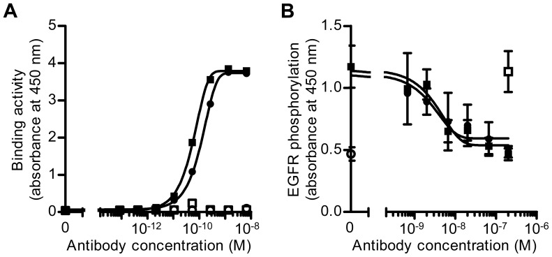 Comparison of Y-142 and Y-073 biological activities toward sHB-EGF. A. Binding activity of Y-142 and Y-073 toward sHB-EGF. Anti-HB-EGF antibody was incubated at various concentrations in an sHB-EGF-coated or a BSA-coated plate. Antibody binding was detected with an HRP-labeled anti-mouse IgG antibody. Y-142 binding to BSA, white square; Y-073 binding to BSA, white circle; Y-142 binding to sHB-EGF, black square; Y-073 binding to sHB-EGF, black circle. The data points represent the mean ± standard deviation (SD) of values acquired in duplicate. B. Neutralizing activity of Y-142 and Y-073 against sHB-EGF-induced EGFR phosphorylation. Anti-HB-EGF antibody was incubated at the indicated concentrations in the presence of 10 nM sHB-EGF with NUGC-3 cells for 15 minutes at 37°C. Cell lysates were incubated on an anti-EGFR antibody-coated plate, followed by incubation with HRP-labeled anti-phosphotyrosine antibody. No sHB-EGF, white circle; sHB-EGF and control IgG, white square; sHB-EGF and Y-142, black square; sHB-EGF and Y-073, black circle. The data points represent the mean ± SD of values acquired in triplicate.