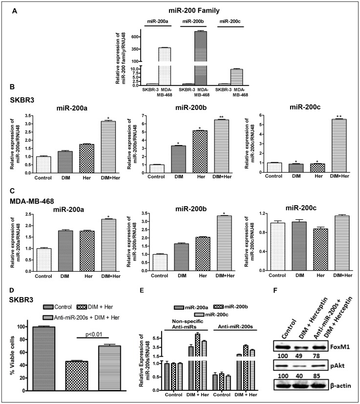 Effects of DIM and Herceptin on <t>miR-200</t> family. ( A ) Comparative expression analysis of miR-200 in SKBR3 and MDA-MB-468 cells by real-time miRNA <t>RT-PCR.</t> ( B and C ) Relative expression analysis of miR-200 in SKBR3 and MDA-MB-468 cells treated with 15 µM DIM, 0.75 µg/ml Herceptin or their combinations for 24 h. ( D ) Effect of anti-miR-200s (anti-miR-200a+anti-miR-200b+anti-miR-200c) on cell proliferation of SKBR3 cells treated with 15 µM DIM and 0.75 µg/ml Herceptin for 72 hours, as measured by MTT assay. ( E ) Efficacy of anti-miR-200s transfections as well the effect of DIM plus Herceptin (15 µM DIM and 0.75 µg/ml Herceptin for 72 hours) on expression levels of anti-miR-200s (miR-200a/miR-200b/miR-200c) was evaluated by real time RT-PCR. ( F ) Effect of anti-miR-200s (anti-miR-200a+anti-miR-200b+anti-miR-200c) on expression of FoxM1 and pAkt in SKBR3 cells treated with 15 µM DIM and 0.75 µg/ml Herceptin for 72 hours, as determined by western blotting. The numbers represent percent of corresponding control normalized to β-actin levels. Her, Herceptin; anti-miR-200s, anti-miR-200a+anti-miR-200b+anti-miR-200c. *, P