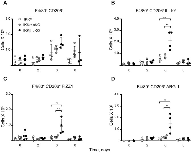 Switch to M2a polarization in IKKβ cKO mice at mid-infection stage. M2a activation occurs in IKKβ cKO mice after sublethal i.d. infection with 10 6 Ft . LVS as evidenced by expression of ( A ) CD206 ( B ) IL-10 ( C ) <t>FIZZ1/Relmα</t> and ( D ) Arg-1 in a flow cytometry time course experiment. Statistical analysis was performed by one-way ANOVA followed by Tukey's ad hoc post-test. (n for IKK f/f , IKKα cKO, IKKβ cKO on day 0∶5/5/5; day 2∶4/4/4; day 6∶4/4/4; day 8∶4/4/3). Results are representative of at least two independent experiments. Bars represent the mean ± SD. **P