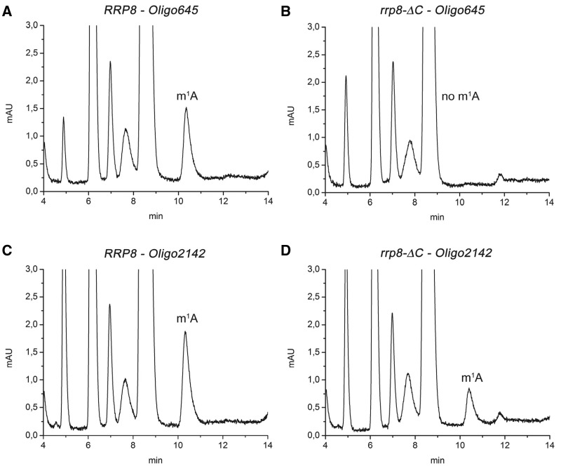 RP-HPLC analysis of mung bean digested RNA fragments. Specific sequences of the 25S rRNA from wild-type ( A and C ) and the rrp8 -_ C mutant ( B and D ), corresponding to Helix 25.1 and Helix 65, respectively, were isolated by hybridization to complementary deoxyoligonucleotides (Oligo645 and Oligo2142) followed by mung bean digestion. RP-HPLC analysis with these fragments was then carried out on a Supelcosil LC-18-S HPLC column (25 cm × 4.6 mm, 5 μm) equipped with a pre-column (4.6 × 20 mm) at 30°C on an Agilent 1200 HPLC system. The following amounts of digested RNA were loaded: (A) 1.9 μg, (B) 1.3 μg, (C) 2.9 μg and (D) 1.8 μg.