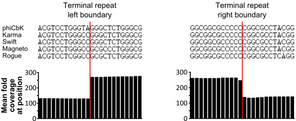 The left and right genomic terminal repeat boundaries of phage phiCbK and four phiCbK-like phages. Terminal boundaries are indicated by the vertical red lines. Above: aligned DNA sequences 12 bp up- and downstream of each terminus are shown; alignments show that the experimentally confirmed boundary sequences of phiCbK are nearly identical to those found in the other four close phiCbK-like relatives. Below: average fold coverage at each base position for all five genomic sequences; note the coverage within the terminal repeats is approximately twofold greater than the surrounding genome, and the breakpoints are identical.