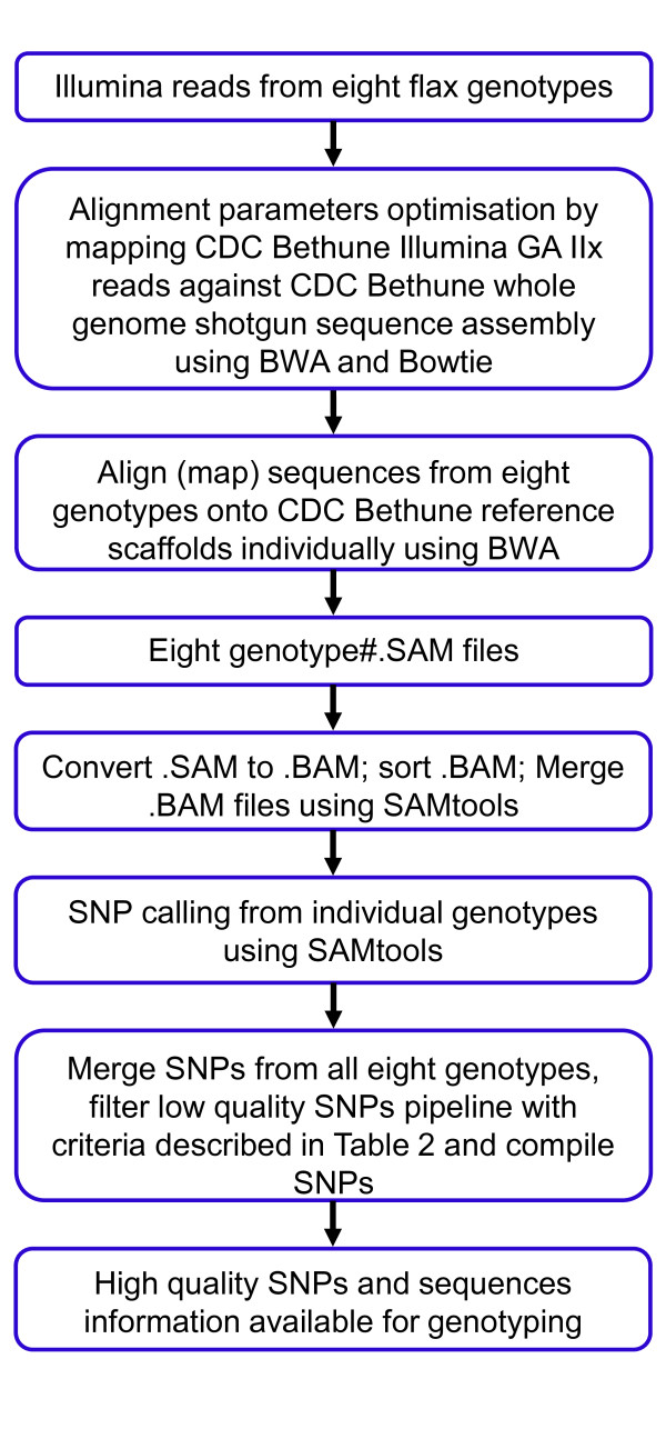 SNP discovery pipeline using Illumina GAIIx sequence reads of eight flax genotypes aligned against the whole genome shotgun sequence assembly of CDC Bethune.