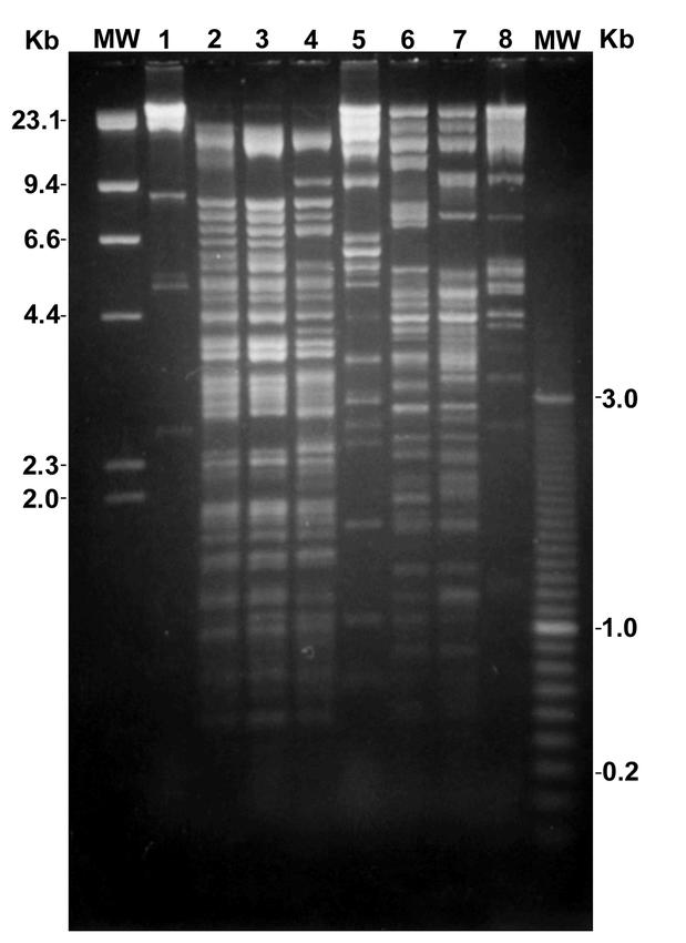 Fragment profile of restriction endonuclease digested DlEPV genomic DNA. About 3.5 µg of digested DlEPV were loaded in the respective lanes of a 0.7% Seaplaque GTG (FMC) agarose gel and electrophoresed in 0.5 × TBE at 40V. The gel was stained with 0.05 mg/ml EtBr. MW=molecular weight in kilobase pairs (Kb); 1=Pst I; 2=EcoRV/Pst I; 3=EcoRV; 4=EcoRV/BamHI; 5=BamHI; 6=EcoRI; 7=EcoRI/Xho; 8=Xho.