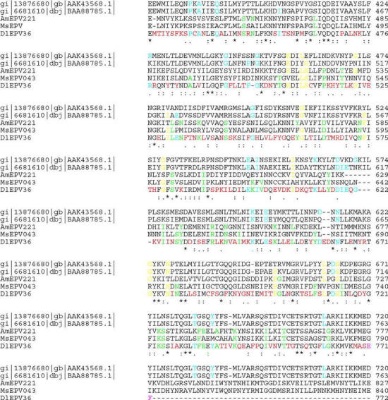 Complete DNA and deduced amino acid sequences of the DlEPV EcoRI clone #36 (RI-36) that contains a partial open reading frame (RI-36-1) of a large gene that encodes a homolog of a DNA-directed RNA polymerase. The GenBank accession number for this sequence is AF500107. Alignment of the deduced amino acid sequences of DlEPV R1-36-1, AmEPV221, MsEPV043, and two vertebrate poxvirus homologs of Vaccinia (Vac) J6R, lumpy skin disease virus and Yaba monkey tumor virus that encode a putative DNA-dependent RNA polymerase. Gold= aa shared between DlEPV and at least one of the EPV AND one of the vertebrate poxvirus sequences. Green = aa shared between DlEPV and at least one of the two entomopoxviruses, AmEPV and MsEPV, but not found in the two vertebrate poxvirus sequences; Pink = EcoR1 (FE translated from the GAATTC) restriction sites; Red= aa found only in the DlEPV sequence; Shadowed area = the NADFDGDE consensus sequence of RNA polymerases; Blue = aa shared between DlEPV and at least one of the vertebrate poxvirus sequences but not found in the two EPV sequences; asterisk (*), semicolon (:) and period (.) = identical, conserved and semiconserved substitutions respectively, among all five sequences.