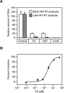 The F2 compound inhibits HIV-1 reverse transcriptase. A . Effects of F2 (5 μM) treatment on the synthesis of early and late viral DNA in human 293T cells challenged with the VSVg-pseudotyped HIV-1 vector, measured at 24 hours post-infection. AZT (5 μM) was used as a reference compound. The values represent amounts of DNA relative to control, untreated cell populations, with error bars showing standard deviations from three independent real-time quantitative PCR assays. B . Effect of compound F2 on HIV-1 RT activity in vitro , determined by measuring the [alpha32P]-dTTP incorporation. The experiment shown, performed with duplicate samples, is representative of two independent experiments. with error bars representing standard errors of the mean.