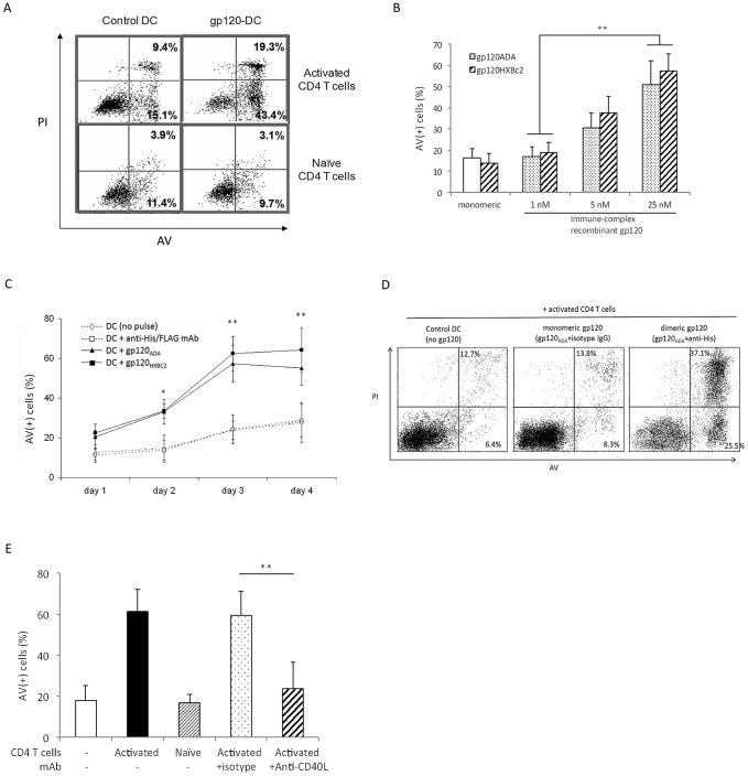 Cross-linked recombinant gp120 sensitizes moDC for CD40L-mediated apoptosis after co-culture with activated CD4 T cells. ( A ) moDC were treated for 24 h with anti-His mAb alone (control DC, left panels) or with 25 nM gp120 ADA cross-linked with anti-His mAb (gp120-DC, right panels), and co-cultured with autologous activated (upper panels) or naïve (lower panels) CD4 T cells for 3 d. The moDC ( Fig. S1 ) were analyzed for Annexin V (AV) and propidium iodide (PI) expression to assess the extent of apoptosis, as manifested by the percentage of the AV-positive [AV(+)] cells. Data are representative of 5 experiments. ( B ) Apoptosis of moDC was analyzed after treatment with different concentrations of cross-linked recombinant gp120 ADA or gp120 HXBc2 and co-culture with activated CD4 T cells for 3 d. DC treated with monomeric gp120 (not cross-linked with anti-His or anti-FLAG mAb) were used as a control. Data represent mean ± SD from 5 experiments; **p