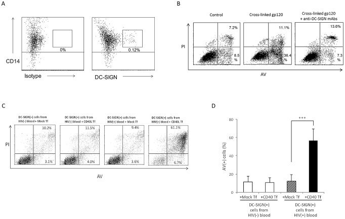 Freshly-isolated DC-SIGN(+) blood DC underwent DC-SIGN-dependent CD40L-mediated apoptosis and DC-SIGN(+) cells from HIV-1-infected individuals are pre-sensitized for CD40L-mediated apoptosis. ( A ) PBMCs from normal HIV(−) individuals were labelled with anti-CD14 plus either isotype control (left panel) or anti-DC-SIGN (right panel) mAbs and analysed by flow cytometry for cell isolation. Data are representative of 4 experiments. ( B ) Purified CD14(+)DC-SIGN(+) cells were treated with anti-His mAb alone (Control) or anti-His cross-linked recombinant gp120 ADA , in the absence or presence of anti-DC-SIGN mAbs, and subsequently co-cultured with CD40L Tf for 3 d. The non-adherent DC were then harvested and subjected to cell viability assay. Data are representative of 4 experiments. ( C, D ) freshly isolated DC-SIGN(+) cells from HIV(+) and HIV(−) blood were cocultured with mock Tf or CD40L Tf for 3 days and subjected to cell viability assay. Data are representative of 4 experiments in C and expressed as mean ± SD in D . ***p