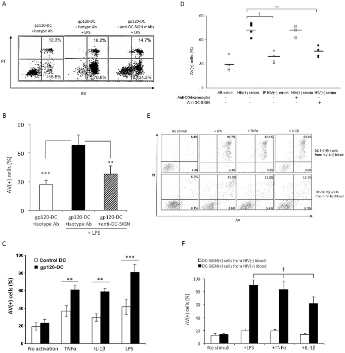Cross-linked recombinant gp120 or HIV(+) serum sensitizes moDC for apoptosis after activation by LPS, TNF-α or IL-1β, and DC-SIGN(+) cells in HIV(+) blood are pre-sensitized for LPS/TNFα/IL-1β-induced apoptosis. ( A,B ) moDC were treated with gp120 ADA in the presence of isotype control or anti-DC-SIGN Abs and subsequently cultured in the absence or presence of 100 ng/ml LPS for 3 d. Data are representative of 5 experiments in A and are expressed as mean ± SD in B ; **p