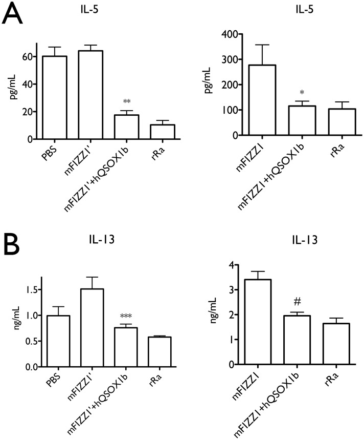 mFIZZ1′ and mFIZZ1 decreased the IL-13 and IL-5 secretion of splenocytes. Splenocytes were cultured at 200,000 cells/well and activated under Th2 permissive conditions for 4 days. Recombinant mFIZZ1′ and mFIZZ1 expressed with or without hQSOX1b were used at 200 ng/ml. rRa is the bacterial recombinant FIZZ1 (200 ng/ml) from (Peprotech) and PBS is the control. ( A ) Recombinant mFIZZ1′ and mFIZZ1 co-expressed with hQSOX1b significantly decreased the IL-5 secretion compared to the proteins expressed alone. ( B ) Recombinant mFIZZ1′ and mFIZZ1 co-expressed with hQSOX1b decreased the IL-13 secretion compared to the proteins expressed alone. ***P