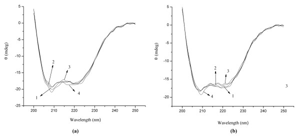 The CD spectra of HSA (a) and BSA (b). Conditions: HSA/BSA: 1.0 × 10 -6 mol/L; C 60 : (1 to 4): 0, 2.78, 5.56, 11.12 × 10 -6 mol/L; pH = 7.4.