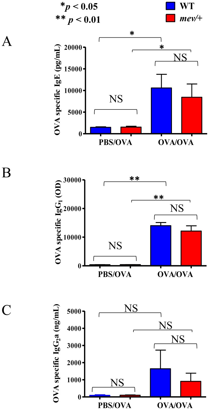 Serum levels of OVA-specific immunoglobulins. Serum samples of WT and mev/+ mice were collected within 2 hrs after challenge and OVA allergen-specific <t>IgE,</t> IgG1 and <t>IgG2a</t> were measured by ELISA. ( A ). Serum OVA-specific IgE. ( B ). Serum OVA-specific IgG1. ( C ). Serum OVA-specific IgG2a. (n = 5–7 mice each group; * P