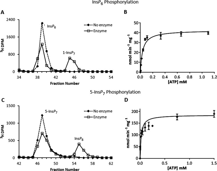 Phosphorylation reactions of PPIP5K2 KD and substrate saturation plots for ATP and ADP ( A ) Either no enzyme (broken line) or 27 μg/ml PPIP5K2 KD (solid line) was incubated with 10 μM [ 3 H]Ins P 6 , and 11 μM ATP for 20 min as indicated in the Materials and methods section. The reactions were quenched and neutralized and analysed by Partisphere SAX HPLC as described in the Materials and methods section. Representative HPLC data are shown. ( B ) The initial velocity of Ins P 6 phosphorylation was determined for forward reactions under pseudo first-order rate conditions [ 38 ] in which the concentration of the designated inositol phosphate was fixed at saturating levels (10 μM; Table 1 ), and the concentration of nucleotide was varied as indicated. Each individual data point was analysed by HPLC as described under the Materials and methods section. The Michaelis–Menten equation was fitted to the data using non-linear regression (GraphPad Prism v5.03). Results are presented as the means±S.E.M. ( C ) Either no enzyme (broken line) or 0.011 μg/ml PPIP5K2 KD (solid line) was incubated with 100 nM 5-[ 3 H]Ins P 7 and 10 mM ATP for 7 min as indicated in the Materials and methods section. The reactions were quenched and neutralized and analysed by Partisphere SAX HPLC as described in the Materials and methods section. Representative HPLC data are shown. ( D ) The initial velocity of 5-Ins P 7 phosphorylation was determined as described in the legend to panel ( B ) for Ins P 6 .