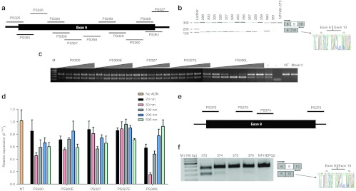 Effect of AONs on mouse and human IL-1RAcP pre-mRNA splicing in vitro . ( a ) AONs targeted to mouse IL-1RAcP pre-mRNA exon 9 and exon-intron junctions. ( b ) Test of AONs on NIH-3T3 cells at 500 nmol/l concentration for 24 hours. RT-PCR analysis of samples shows the full-length upper band and the skipped product as a lower band that were amplified with primers specific for exon 8 and 10. Sequence analysis also confirmed exon 9 skipping. ( c ) RT-PCR results of RNA samples from NIH-3T3 cells transfected with AONs PS300, PS327, 25-mer counterparts of them and PS300L that was designed to increase efficiency of PS300. Triangles show increasing concentrations of 20, 50, 100, 200 and 500 nmol/l for full 2′- O -MePS oligos and additional 10 nmol/l for PS300L (+ = positive control PS300, 100 nmol/l; − = water control, NT = non-transfected cells, Mock tr = only Lipofectamine-2000). ( d ) Quantification of skipping levels of AON concentration from 20 to 500 nmol/l by qPCR analysis. β-Actin was used as the reference gene and each bar represents the mean value of three different experiments ± SEM. ( e ) AONs targeted to human IL-1RAcP pre-mRNA exon 9 and exon-intron junctions. ( f ) Test of AONs on HEPG2 cells at 500 nmol/l for 24 hours. RT-PCR analysis of samples shows the full-length upper band and the skipped product as a lower band that were amplified with exon 8- and 10-specific primers. The sequence analysis also confirmed exon 9 skipping. AON, antisense oligonucleotide; IL-1RAcP, interleukin-1 receptor accessory protein; qPCR, quantitative PCR; RT-PCR, reverse transcription-PCR.