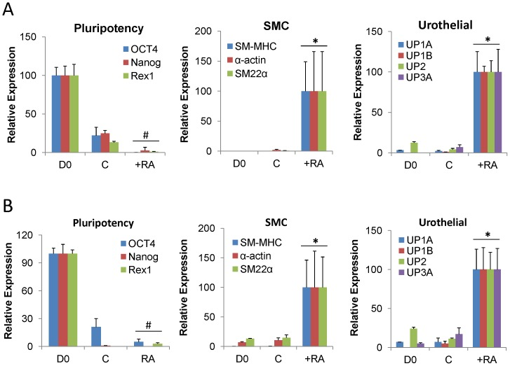 RA stimulates SMC and urothelial markers in pluripotent stem cells cultured on silk scaffolds. [ A, B ] Real time RT-PCR analyses of mRNA transcript levels of pluripotency transcription factors (OCT4, Nanog, REX1), SMC contractile genes (SM-MHC, α-actin, SM22α), and urothelial-associated uroplakins (UP) in ESC [A] or iPS cells [B] cultured on fibronectin-coated Group 2 matrices for 14 d in the presence of RA or maintained as spontaneously differentiating controls (C). D0 = naïve, undifferentiated controls. Levels normalized to GAPDH expression. Mean ± SD per data point. (#) = p ≤0.05, in comparison to D0. (*) = p ≤0.05, in comparison to D0 and C conditions.