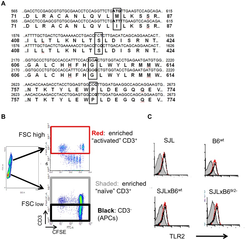 Identification of polymorphisms of TLR2 between SJL and B6 strains and expression of TLR2 on immune cells. A ) Comparison of the sequence of TLR2 of SJL and B6. The non-synonymous and synonymous polymorphisms are boxed. Base (first line) and aminoacid (second line) sequences of B6 and the corresponding sequences (third and fourth lines, respectively) of SJL around the polymorphic residues are reported. B ) Identification of enriched activated T cells, naïve T cells and APC in LN cells by scattering properties. SJL, B6 wt , F1 (SJLxB6 wt ) and F1 (SJLxB6 tlr2− ) mice were immunized with IFA containing 50 microgrammes/mouse of M tb .. 8 days later, mice were sacrificed and cells from draining LN were loaded with CFSE and stimulated with PPD. After 3 days, cells were collected and stained with PE-labeled anti-CD3 monoclonal antibody. The colours define cells examined for TLR2 expression in panel C. C ) SJL, B6 wt , F1 (SJLxB6 wt ) and F1 (SJLxB6 tlr2− ) mice were immunized with IFA containing 50 microgrammes/mouse of M tb . Eight d later, mice were sacrificed and cells from draining LN were stimulated with PPD. After 3 days, cells were collected and stained with PE-labeled anti-CD3 mAb and with FITC labeled anti-TLR2 mAb. Expression of TLR2 was evaluated on high scattering CD3 + cells (activated T cells, red line), low scattering CD3 + cells (naïve T cells, shaded area) and CD3 − cells (mostly APC, black line), as shown in B .
