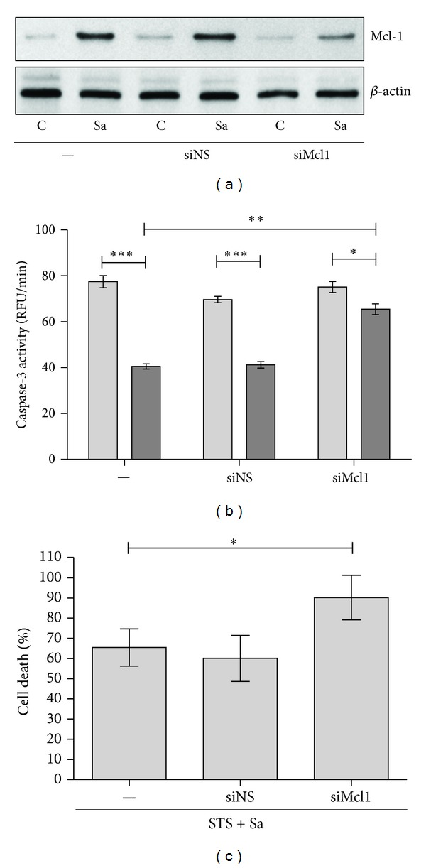 Effect of Mcl-1 expression on cytoprotection induced by S. aureus in hMDMs. (a) Human macrophages were treated with an MCL1 <t>siRNA</t> (siMCL1) or a nonspecific siRNA (siNS). At 24 h following <t>transfection</t> macrophages were infected with S. aureus at an MOI 1 : 50. After additional 24 h cells were collected and Mcl-1 expression was detected by immunoblot. Data are representative of three separate experiments using hMDMs derived from different donors. (b) The increase in caspase-3 activity (RFU/min) induced by STS in MCL1 knockdown macrophages infected with S. aureus . Twenty-four hours after treatment with siRNA, hMDMs were infected with S. aureus (24 h), followed by treatment with STS at a concentration of 1 μ M for 18 h. The measurement of caspase-3 activity (RFU/min) in cell lysates was performed using DEVD-AFC as a substrate. The figure is representative of three experiments, using hMDMs cultures obtained from different donors. Light bars—STS, dark bars—Sa + STS. Data represent means ± SD. * P
