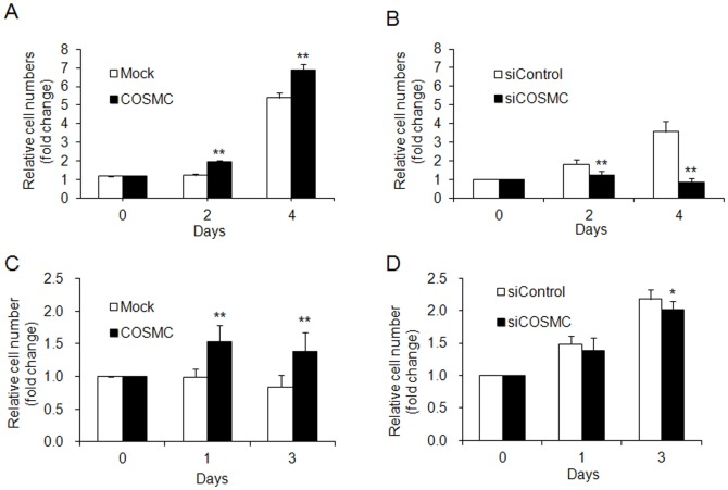 COSMC overexpression enhances cell growth in HUVECs. (A) Cell growth of HUVECs transfected with pcDNA3.1 control plasmid (open bars) or COSMC/pcDNA3.1 (closed bars) analyzed by trypan blue exclusion assays. (B) Cell growth of HUVECs transfected with control siRNA (open bars) or COSMC siRNA (closed bars) analyzed by trypan blue exclusion assays. (C) Cell growth of EA.hy926 cells overexpressing COSMC. (D) Cell growth of EA.hy926 cells with COSMC knockdown. Results are presented as means ± SD from three independent experiments. * P