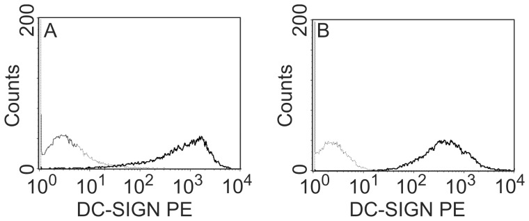 DC-SIGN expression in stably transfected MDCK DC-SIGN and Vero DC-SIGN cells. MDCK cells (A) and Vero cells (B) without (dotted line) and transfected with the gene encoding DC-SIGN (solid line) were analyzed for DC-SIGN expression after staining with a PE-labeled antibody to DC-SIGN and flow cytometry.