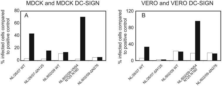 The number of glycosylation sites present on HA determines the virus infection rates in DC-SIGN expressing cells. MDCK (A) and Vero (B) cells, transfected with the DC-SIGN gene (black bars) or not (white bars) were treated with neuraminidase from vibrio cholerae and GolgiStop for 30 minutes to remove sialic acids from the cell surface. These cells were subsequently inoculated with A/Netherlands/26/07, A/Netherlands/26/07-Δ125, A/Netherlands/602/09, A/Netherlands/602/09-Δ276 or A/Netherlands/602/09-VN54 N125 N160. The percentage of infected cells relative to the positive control (untreated cells still possessing sialic acid) was assessed after detecting infected cells using a FITC-labeled antibody to the viral nucleoprotein and flow-cytometry.
