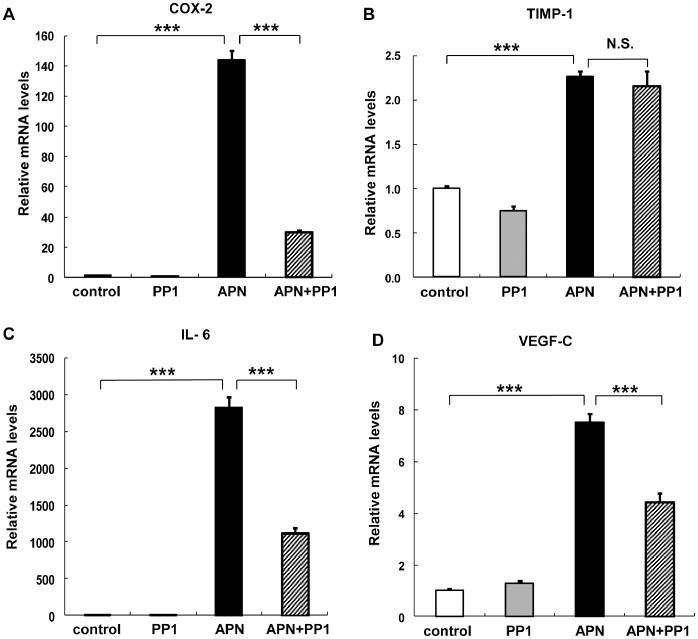 Effects of Src inhibitor on adiponectin-induced changes in peripheral blood monocyte-derived macrophages (PBDMs). PBDMs were preincubated with 10 µM PP1 for 30 min and then incubated with adiponectin for 6 hours (A–D). The mRNA expression levels of COX-2 (A), TIMP-1 (B), IL-6 (C), and VEGF-C (D) were quantified by real-time PCR. Values are normalized to the level of GAPDH mRNA and expressed as mean ± SEM (n = 3). ***P