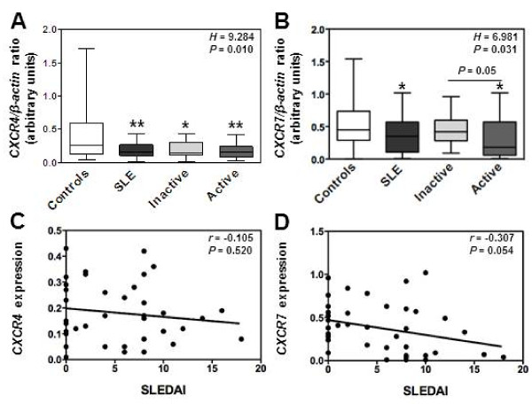 Decreased levels of CXCR4 and CXCR7 mRNAs in active SLE leukocytes. (A and B) The relative levels of CXCR4 (A) and CXCR7 (B) transcripts in PBMC from SLE patients, distributed according to disease activity ( i.e. inactive versus active), were compared by real-time PCR with those from healthy individuals. Each individual sample has been run in triplicate. Results are expressed as CXCR4 / β-actin or CXCR7 / β-actin AU ratio and presented as box plots with median values, 25 th and 75 th quartile and the range of values. Kruskal-Wallis H test and associated P values are indicated. * P