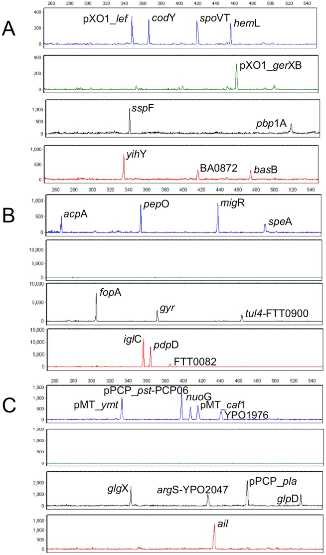30-plex PCR profiles generated from select biothreat agents Ba, Ft , and Yp . Electropherogram obtained from 100 copies of Ba strain Sterne (A); from 1000 copies of Ft subsp. tularensis WY96 (B); and from 100 copies of Yp bv. mediavalis strain KIM10v (C). Note that 1000 copies of Ft DNA are required to detect two of the FAM-labeled targets ( acp A and spe A) due to their high AT content resulting in reduced PCR efficiency.