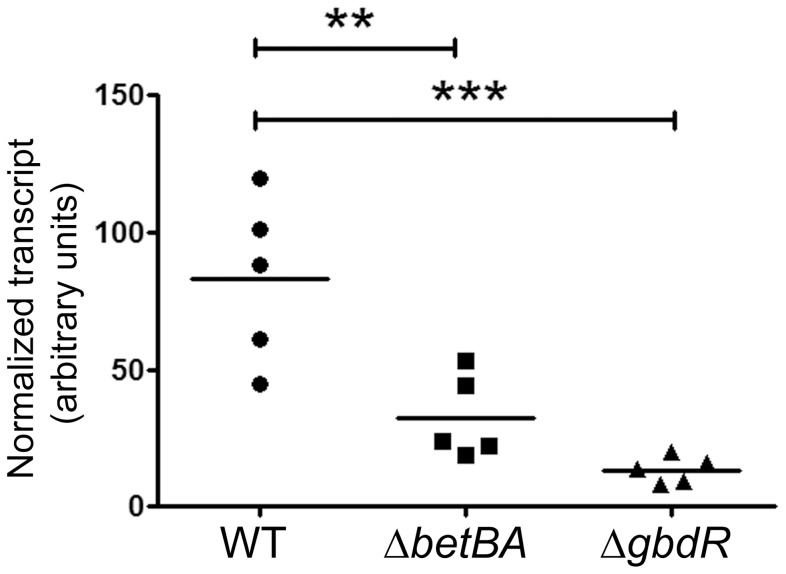 Deletion of betBA decreases plcH transcript abundance during infection. RNA was isolated from homogenized infected lungs after six hours and subject to quantitative PCR using primers specific for plcH normalized to the peptidyl-prolyl isomerase ( ppiD ) transcript. The data shown are from one representative of two independent experiments. The horizontal bar represents the arithmetic mean of each group. Statistical analysis was done using ANOVA followed by Dunnett's Multiple Comparisons test; ** represents p