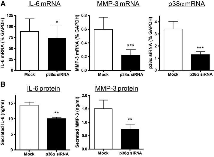 Effect of p38α gene silencing on IL-6 and MMP-3 expression. CF were mock-transfected (open bars) or transfected with p38α siRNA (filled bars), cultured for 4 days to promote p38α protein silencing, then stimulated with 10 ng/ml IL-1α for 6–24 h. (A) Real-time RT-PCR data for mRNA levels of IL-6, MMP-3 and p38α, expressed as percentage GAPDH mRNA levels. ∗∗∗ P