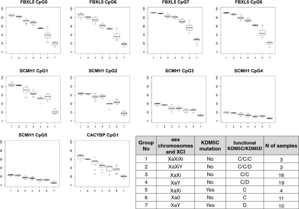 DNA methylation at FBXL5, SCMH1 an d CACYBP promoters correlates with KDM5C/KDM5D dosage. Boxplots show DNA methylation levels for CpG sites within the FBXL5, SCMH1 and CACYBP promoters in blood in 7 group of samples with different dosage of KDM5C/KDM5D . CpG numbering corresponds to Figures 4 D, 6 D and 7 D. CACYBP CpG#2 boxplot is not shown, as no correlation with KDM5C/KDM5D dosage was found for this site. The Y axis is % of DNA methylation. The X axis shows groups of samples, numbered from 1 to 7. Information for each group regarding sex chromosome constitution, X-chromosome inactivation (XCI, Xa is active and Xi is inactive X-chromosome respectively), presence/absence of KDM5C mutation, functional KDM5C/KDM5D dosage, and number of samples is shown in the table beside the graph.