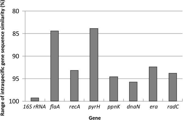 Taxonomic resolution based on the ranges of intraspecific sequence similarity (%) for the individual 16S rRNA, flaA , recA , pyrH , ppnK , dnaN , era and radC genes, within the 20 Treponema denticola strains analyzed. The y-axis indicates the levels of nucleotide identity (%) shared between the eight individual gene sequences analyzed from each strain, with the range represented as a bar.